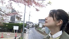 NHK1505桜
